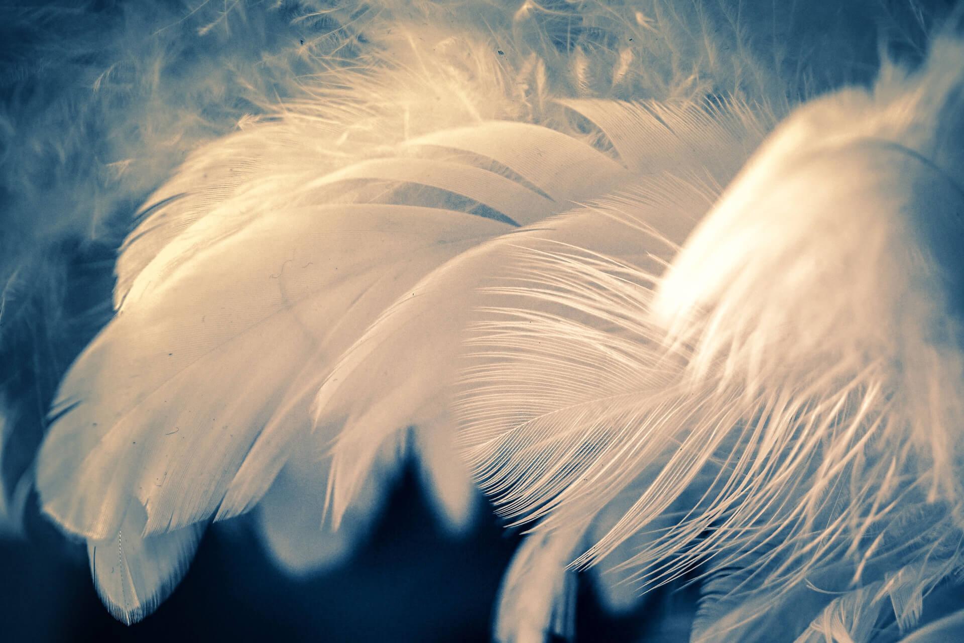 Feather-feder-weiß-fehlgeburt-verarbeiten