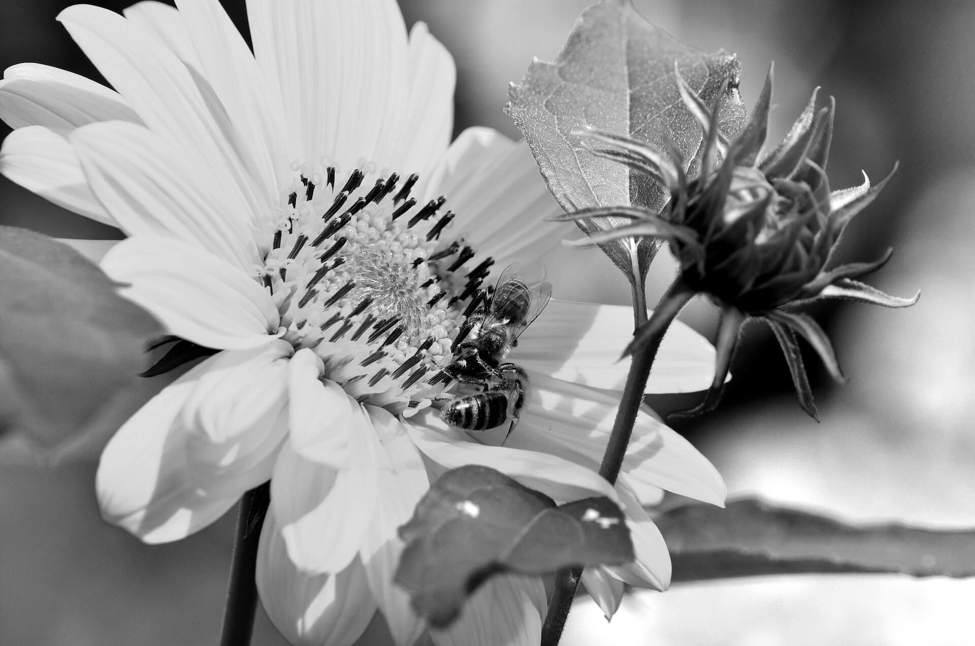 blühpatenschaft-als-trauerritual-bei-fehlgeburten-blog-gedankenbalsam